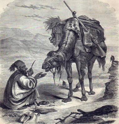 Traditional Arabic costume. Arabian Camel Driver. Camelus dromedarius.