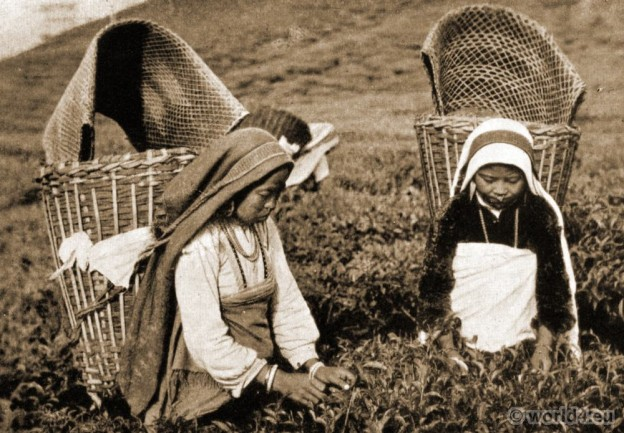 Nepali Cooly Girls harvesting tea leaves. Views of Darjeeling by J. Burlington Smith.