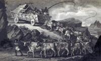 Ox-wagon, bullock, wagon, South Africa, Hottentot,