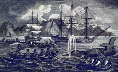 Whale fishery. South Africa. Table Bay. 19th century history