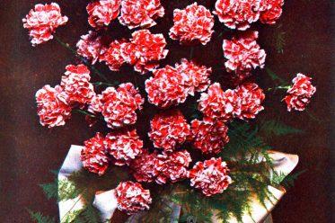 Gerbe, Carnation, Roses, Bouquet, Decoration