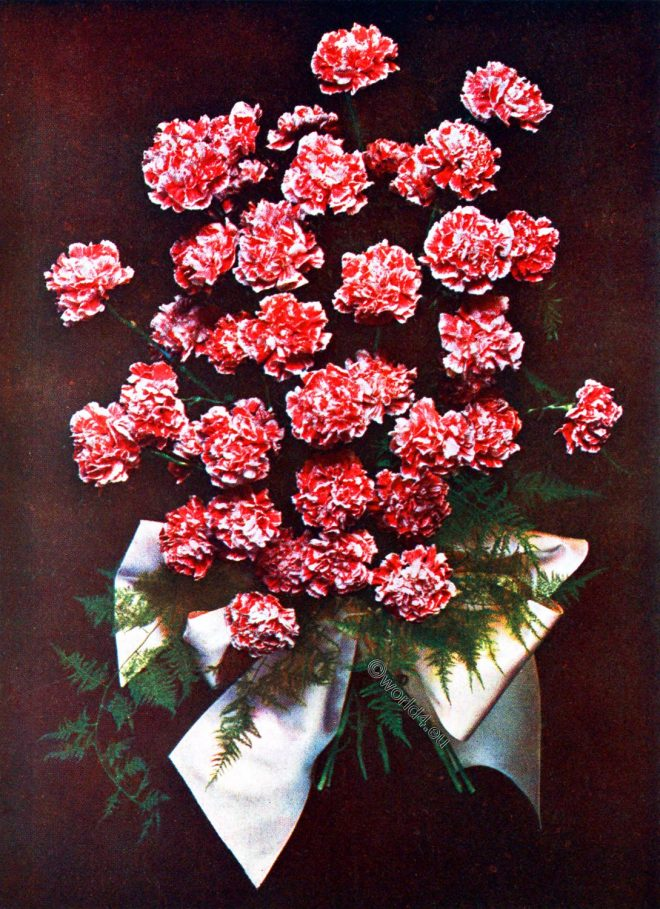 Gerbe, Carnation, Roses, Bouquet, Decoration
