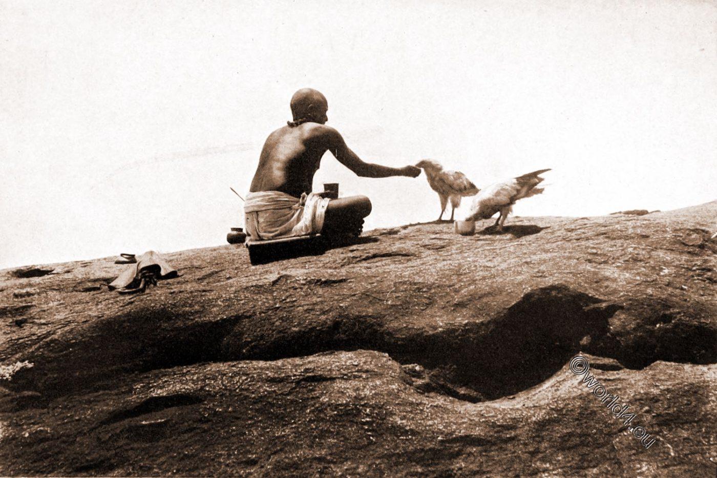 Sacred, Vultures, Tirukazhukunram, Tirukalukundram, Tamilnadu