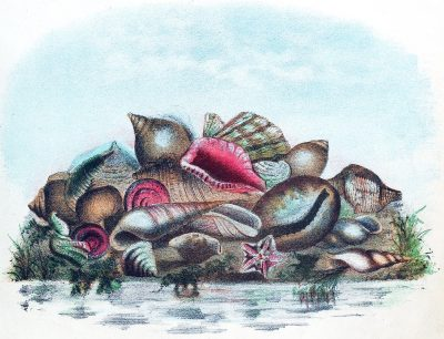Illustration, shells