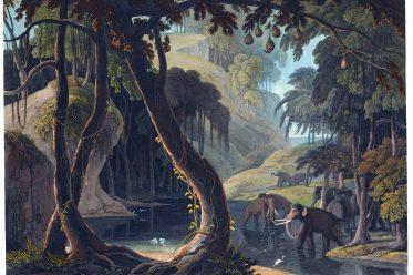 SITSIKAMMA, Samuel Daniell, Tsitsikamma, National Park, South Africa, Garden Route,
