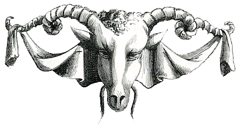 illustration, goat