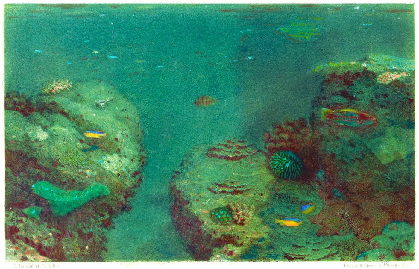 Sri Lanka, Corals, Submarine, Travel, diving,