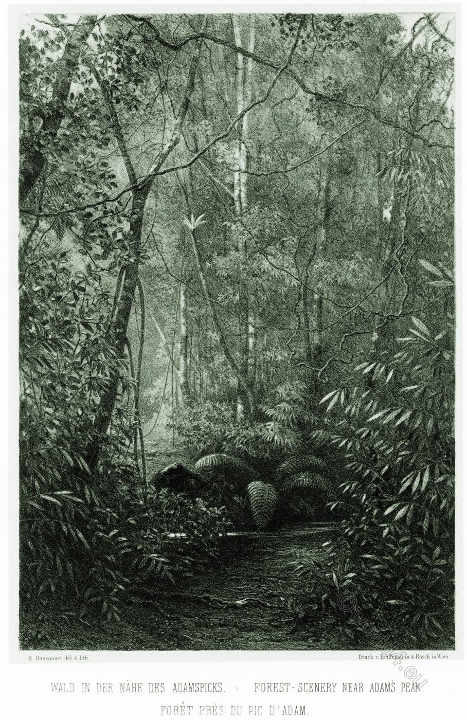 Forest, scenery, Adams Peak, Sri Lanka,