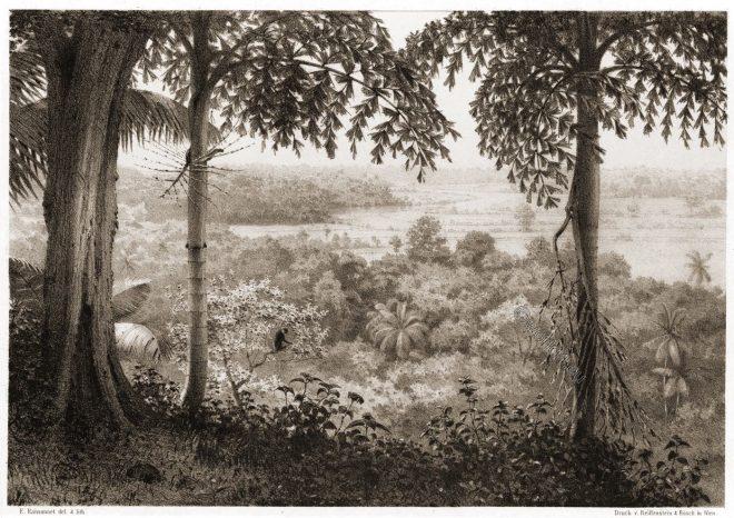 Gongala, Mountain range, Sri Lanka, Galle, Gin Ganga, Wackwelle Hill, Landscape, Ceaylon, black monkey