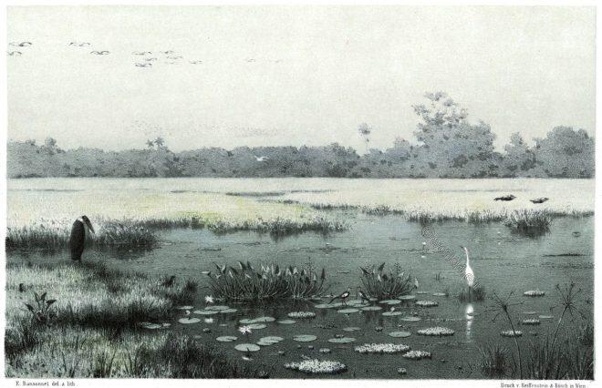 Sri Lanka, Marsh, scenery, marshes, Hatagala, Hambantota,