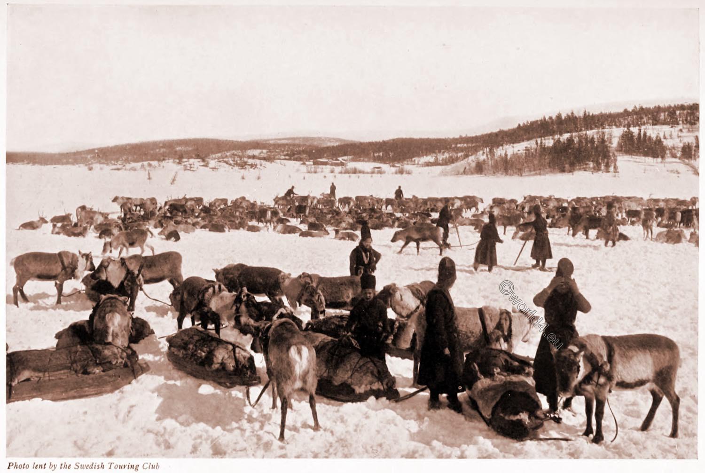 Sami, reindeer, herding, Lapland, Lapp, nomads