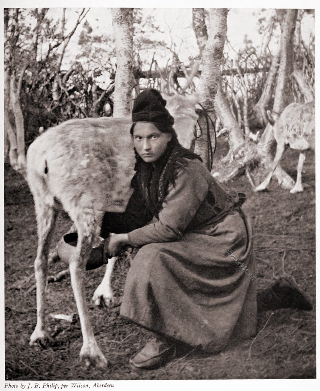 Sámi, women, lapp, Lapland, costume, milking, rendeer, reindeer,