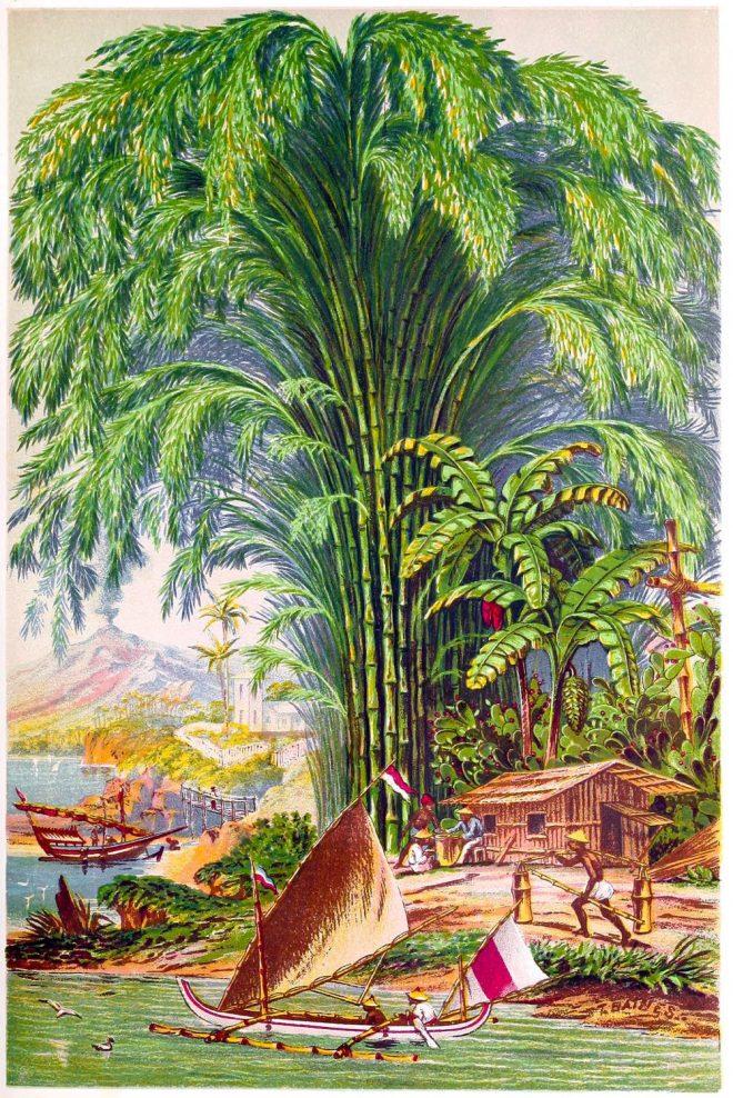 Bambusa, bambos, Giant, Thorney, Bamboo,