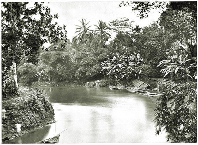 Java, Tropical, river, vegetation