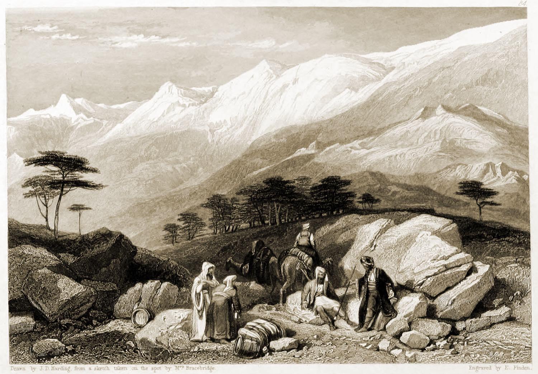 Cedars, Lebanon, Holy Land, Landscape, Bible, Illustrations, J. D. Harding