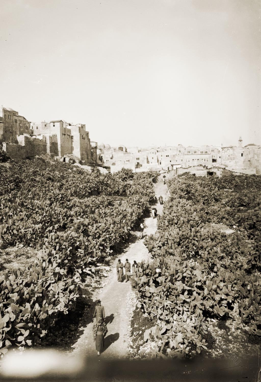 Dung, Silwan, Gate, Tyropeon, Valley, Israel, Holy Land, Jerusalem,